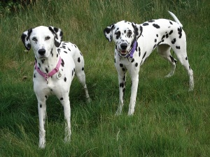 pebble and dog